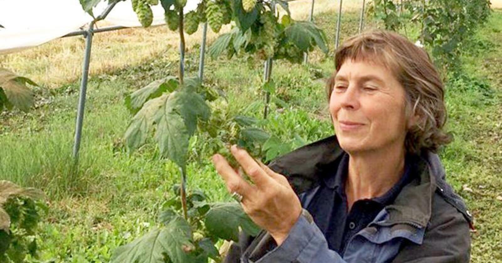 Mette Goul Thomsen er forskar i Nibio. Sidan 2013 har dei jobba med å finne best moglege humleplanter til humleproduksjon i Norge. Foto: Privat