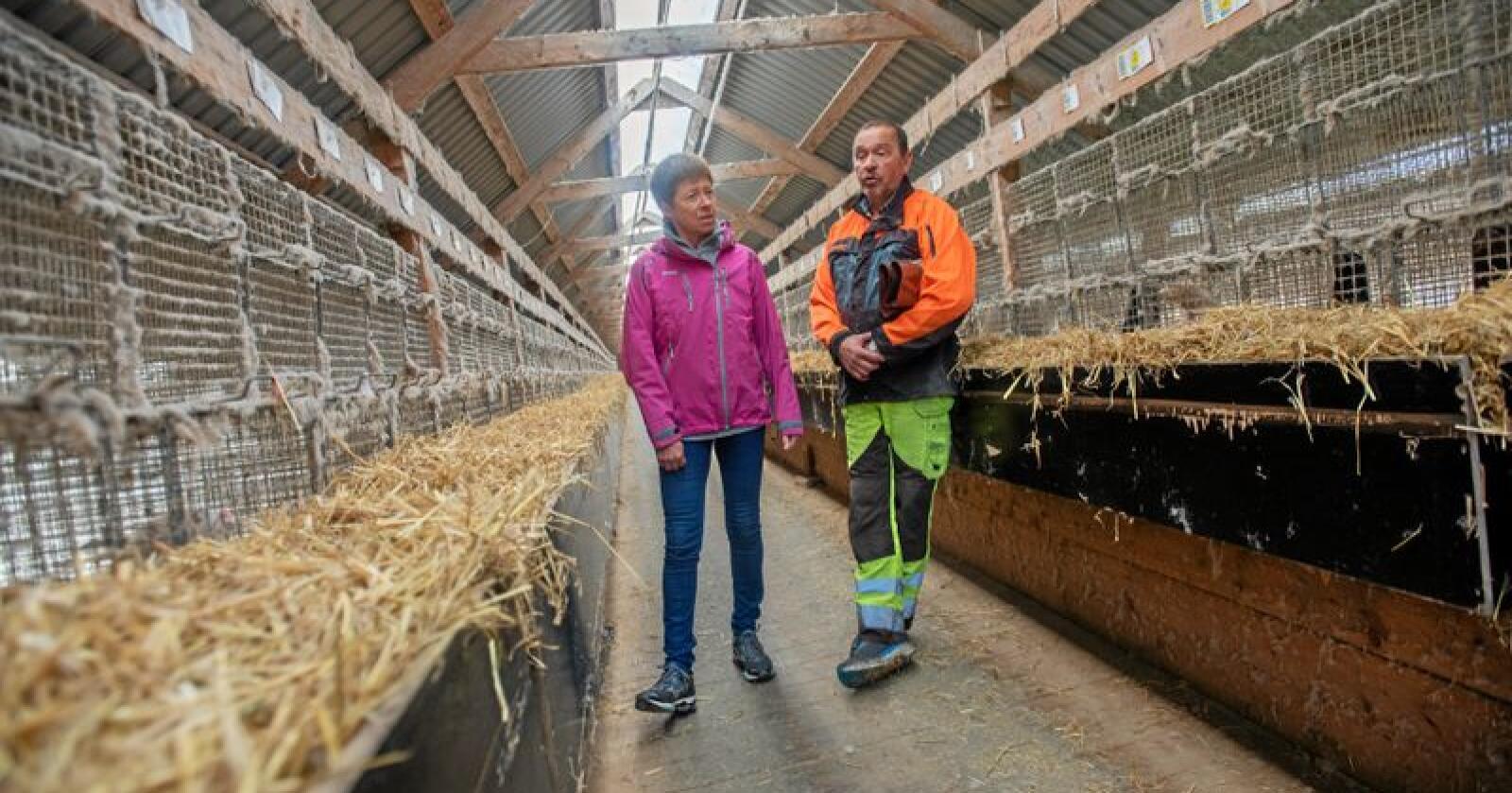 Snart over: Hilde Augdal og Arve Friberg avvikler driften etter at regjeringen har vedtatt næringsforbud. Foto: Håvard Zeiner