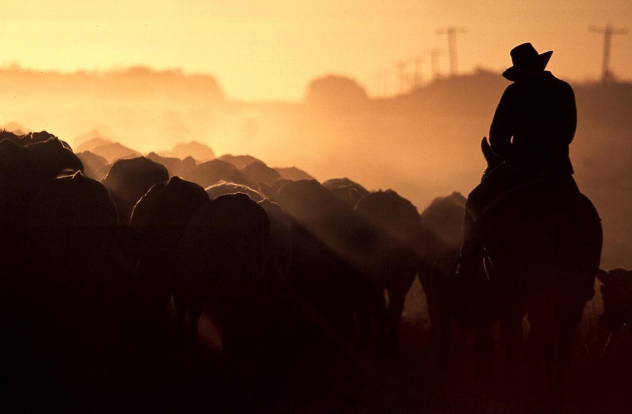Australia er et av verdens største land, og dermed også et av landene med mest landbruksjord. Her fra Queensland-provinsen, hvor mesteparten av Kidmans eiendommer ligger. Foto: David Gray/Reuters
