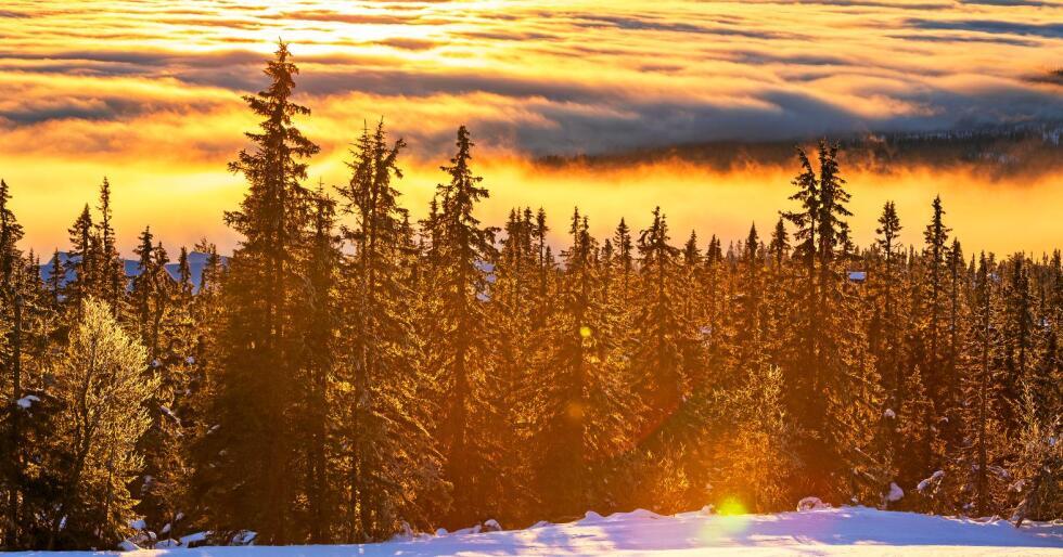Bind karbon: Skogen. Foto: Galyna Andrushko / Colourbox