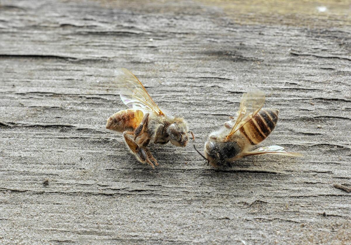 Insektsdød: En tysk studie av et naturreservat viser 70 prosent nedgang i insekter på 25 år. Foto: Colourbox
