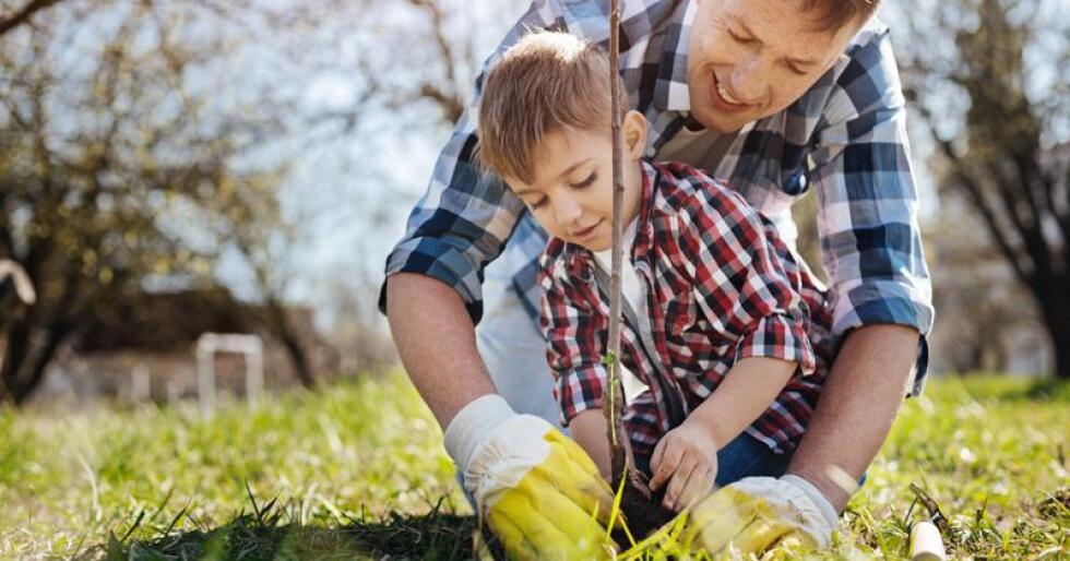 HAGENS STOLTHET: Et tre gir skygge, bakgrunnsmusikk, farger, oppholdsrom og minner. Høsten er et godt tidspunkt for planting.    FOTO: Shutterstock / NTB Scanpix