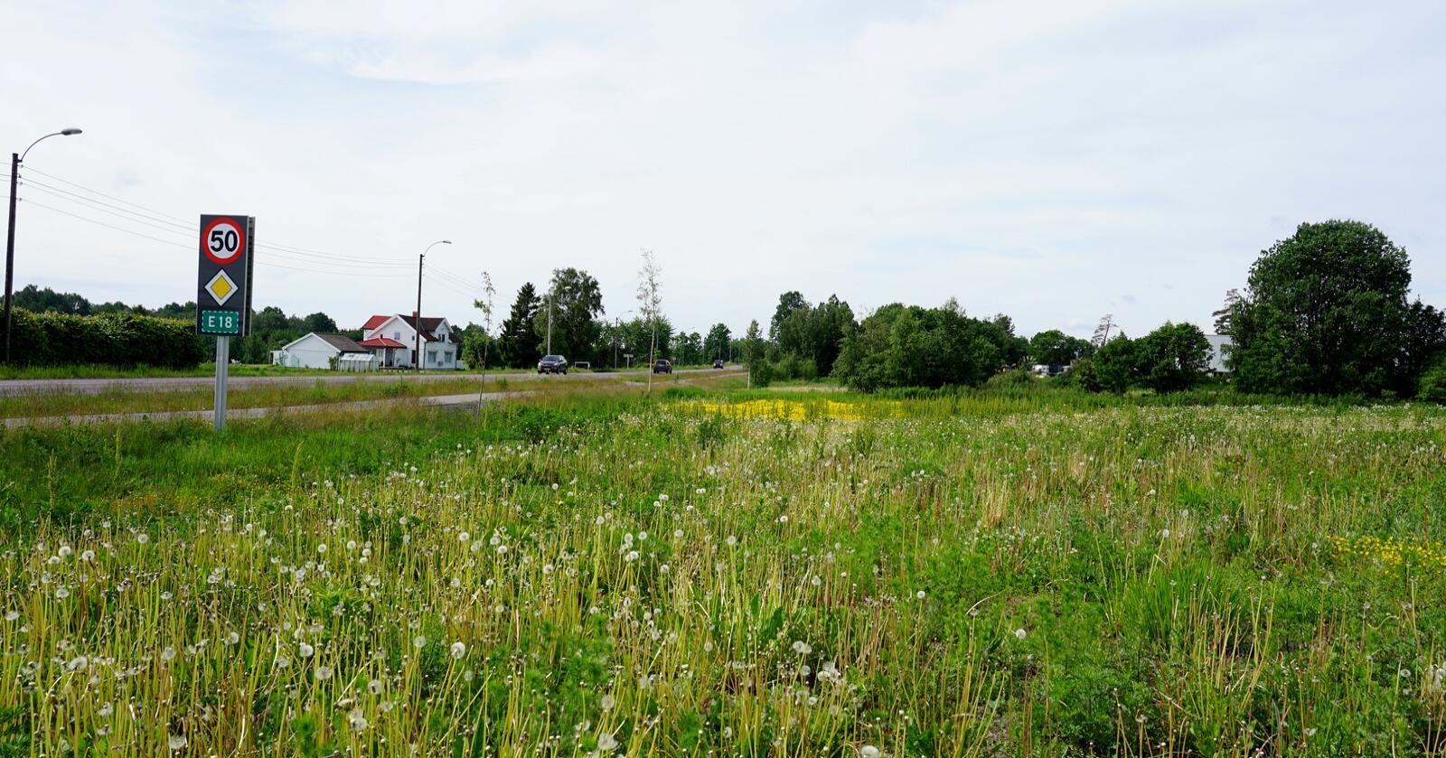 Dette jordet i Skolmar i Sandefjord har blitt vedtatt omdisponert og vil bli flyttet til eksisterende arealer som allerede er fulldyrket. Foto: Lars Bilit Hagen