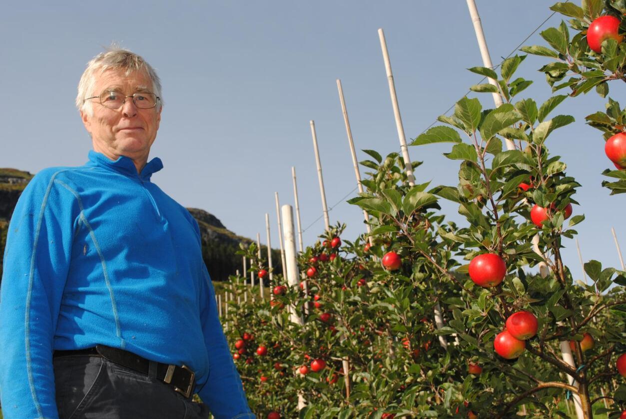 Økoplommer: Øystein Pugerud vil satse vidare på økologisk plommer, men har ingen planar om økoeple. Årets sesong er både dårleg og sein for han og mange andre fruktdyrkarar på Vestlandet.