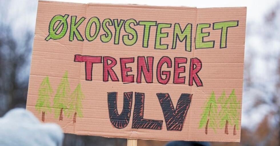 Dyrerettighetsorganisasjonen NOAH arrangerer demonstrasjon mot felling av ulv. Arrangementet holdes på Eidsvolls plass foran Stortinget i Oslo lørdag ettermiddag.Foto: Håkon Mosvold Larsen / NTB scanpix