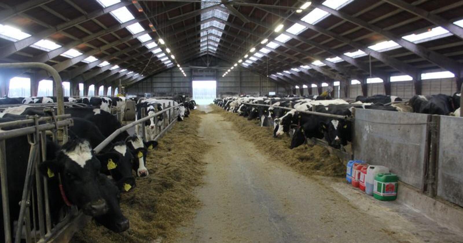 Arla-bønder som gjennomfører en årlig klimasjekk vil få 10 øre ekstra for en kilo melk.    Arkivfoto