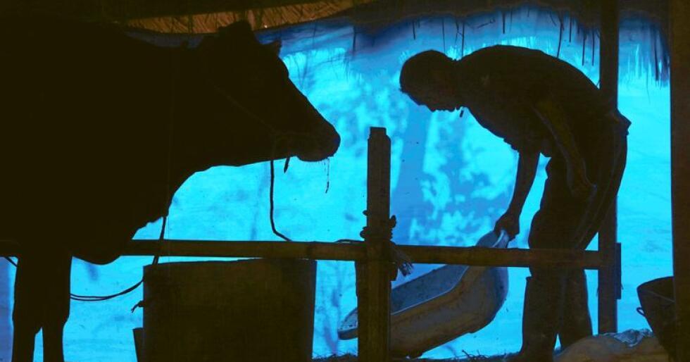 Mens stadig flere investorer bruker stadig mer tid på landbruk, drømmer denne bonden kanskje om å tjene hundretusenvis av dollar? Foto: Niranjan Shrestha / AP / NTB Scanpix