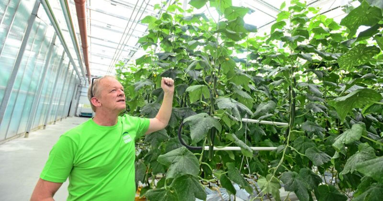Mer enn 30 millioner: Daglig leder i Frostagrønt, Johan Morten Vold, har investert over 30 millioner kroner i utbyggingen som skal gi rundt 40 prosent økt agurkproduksjon. Alle foto: Håvard Zeiner