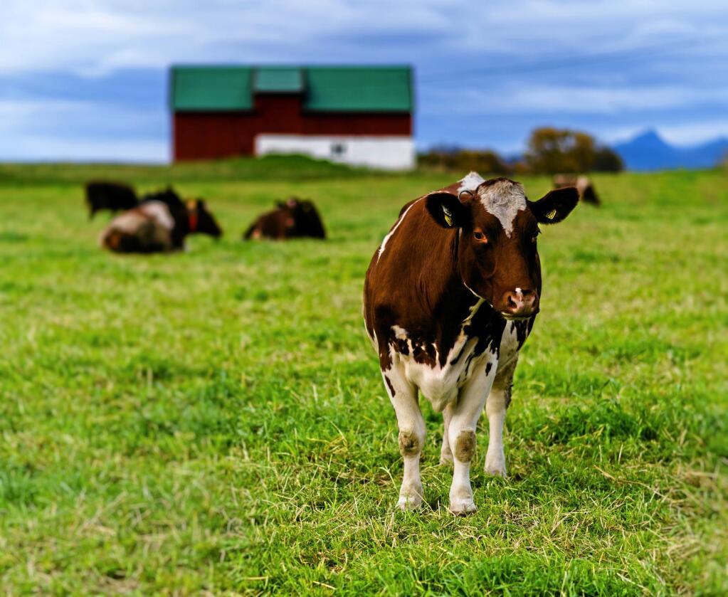 Dyrevelferd: Dyr har egenverdi og rettigheiter, skriver Jenny Rolness fra Dyrenes Røst. Foto: Spacedrone808 / Colourbox
