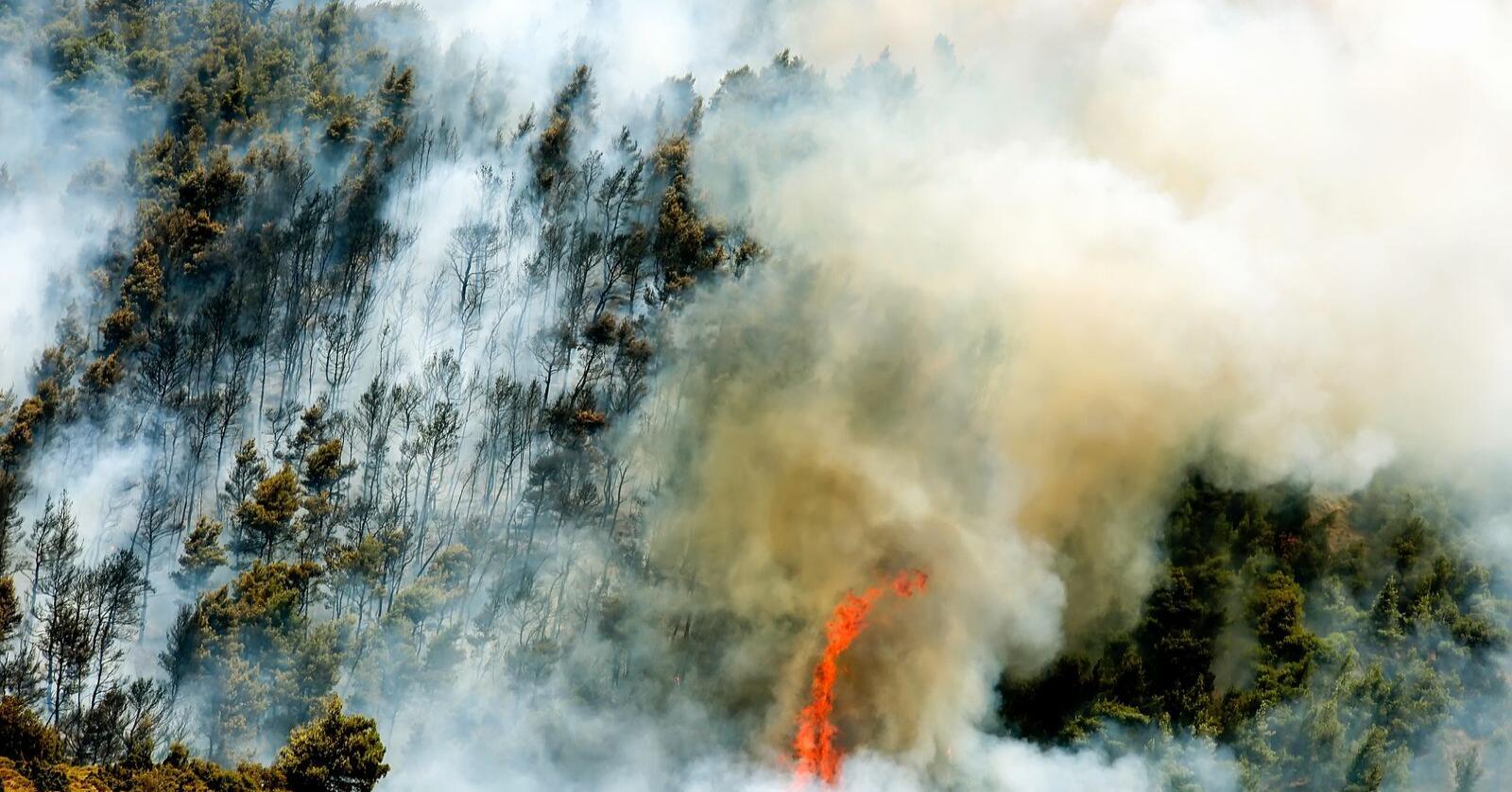Katastrofe: Stadig flere land rundt Middelhavet (her Hellas) herjes av omfattende skogbranner og rekordhøye temperaturer. Foto: Shutterstock