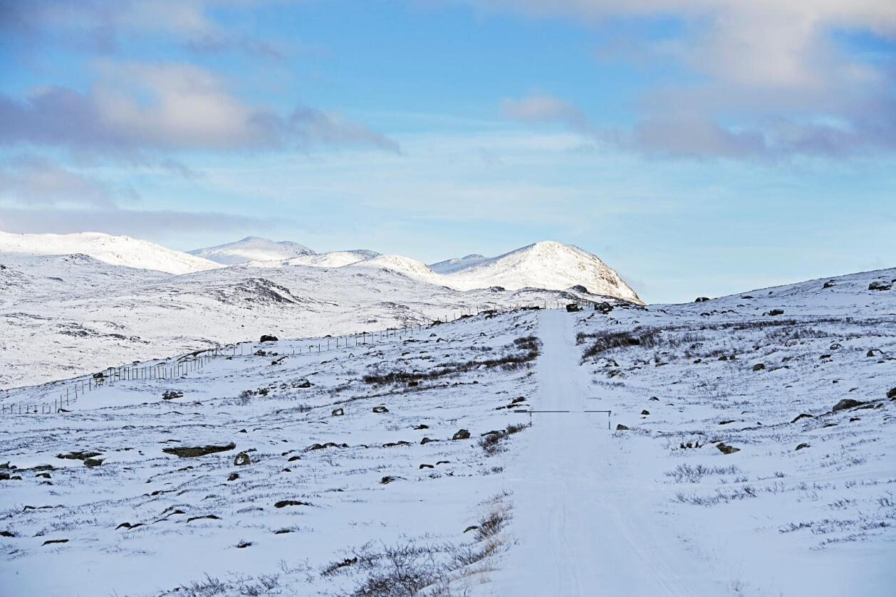 Oppstart statlig felling av villrein i Nordfjella sone 1, til høyre. I fjella til venstre er det tamrein. Foto: Marit Hommedal / NTB scanpix