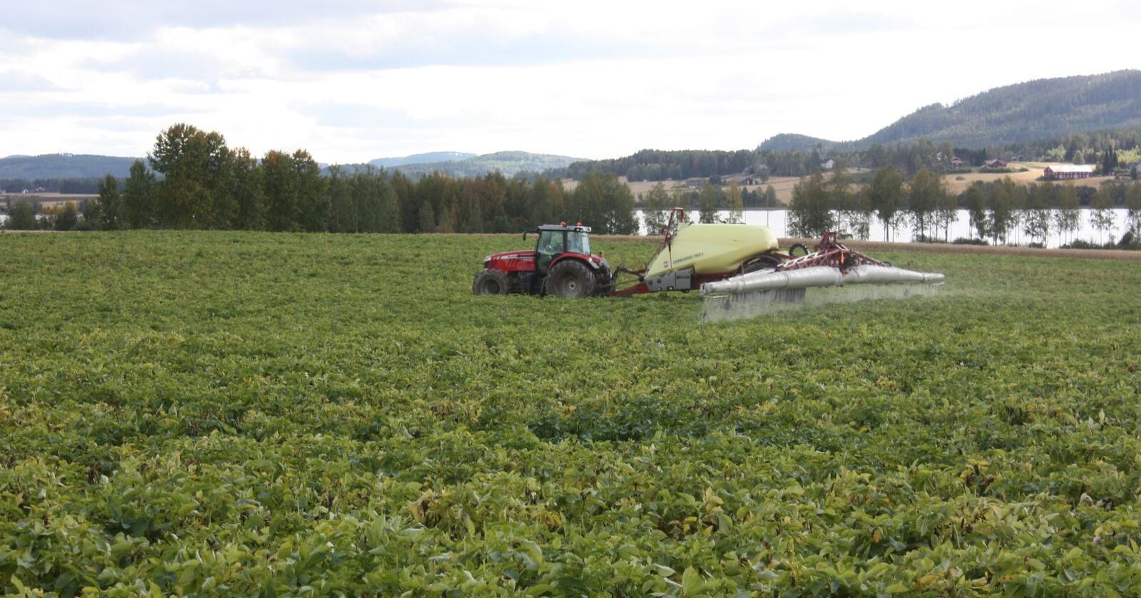 Sprøytemidler: Proxanil er godkjent for bruk i Norge. Her blir potetene sprøytet med Reglone. Foto: Borghild Glorvigen