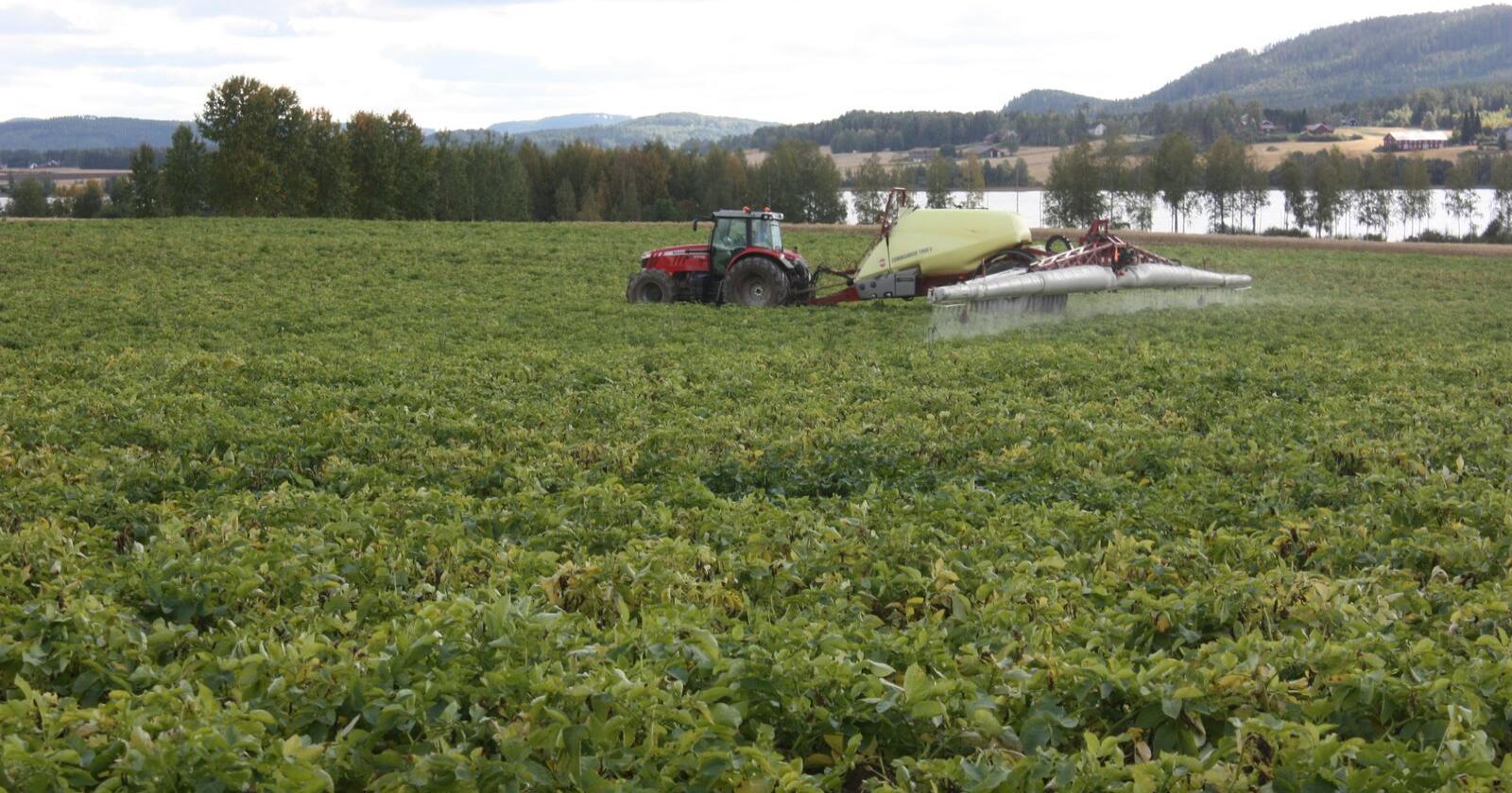 Forbudt: Dikvat, det virksomme stoffet i Reglone, blir forbudt i 2020. Reglone fører til at potetriset/grønnmassen dør, og at tørråtesoppen ikke lenger har noe plantemateriale å vokse på. (Foto: Borghild Glorvigen)
