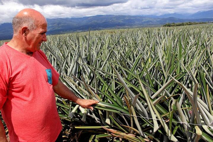 Beltran Vega Castro har jobbet på ananasplantasjene sør i Costa Rica. Han startet en miljøorganisasjon for å kjempe mot produksjonsmåten av den tropiske frukten. Foto: Ingjerd Sørlie Yri