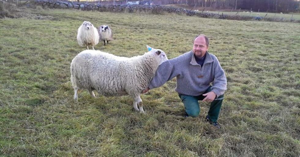 Eivind Såstad Mjøen er sauebonde i Oppdal og rovdyransvarlig i Sør-Trøndelag Sau og Geit. Han liker ikke at den svenske ulvebestanden trekker nordover. Foto: Torhild Svisdal Mjøen