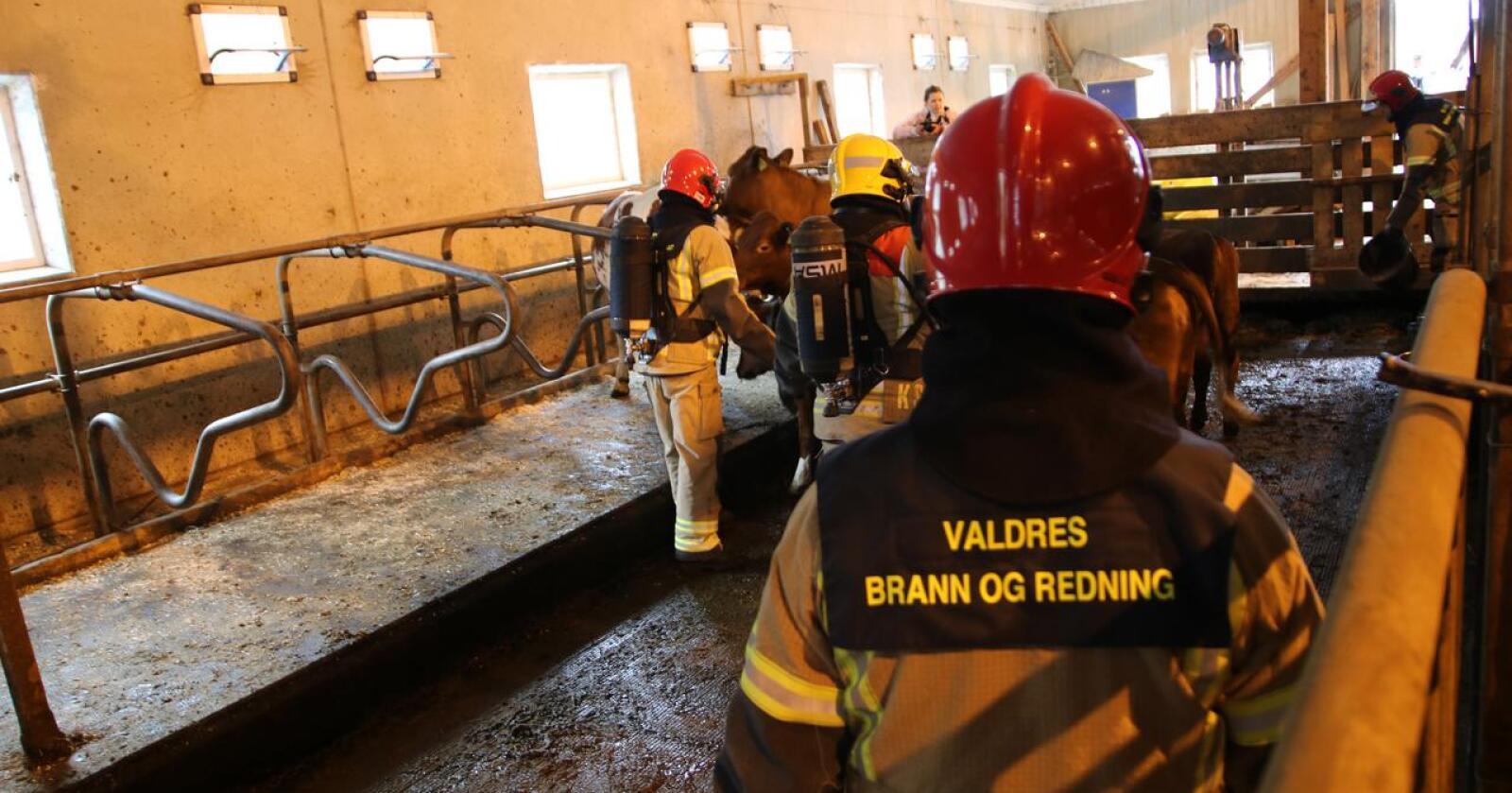 Det omkom til sammen 852 husdyr i brann i 2020. Dette er vesentlig lavere enn siste ti års gjennomsnitt. Bildet viser en brannøvelse i Sør-Aurdal kommune. Foto: Karl Erik Berge