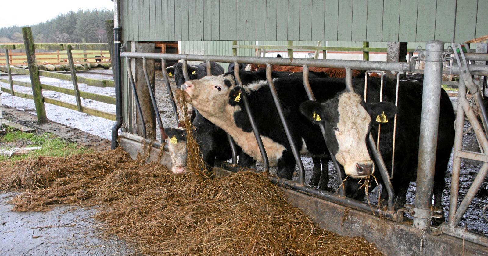 Greit: Klimaplanen vil ikke kutte i norsk matproduksjon. Økte avgifter på reelle utslipp er til å leve med. Foto: Bjarne B. Aase