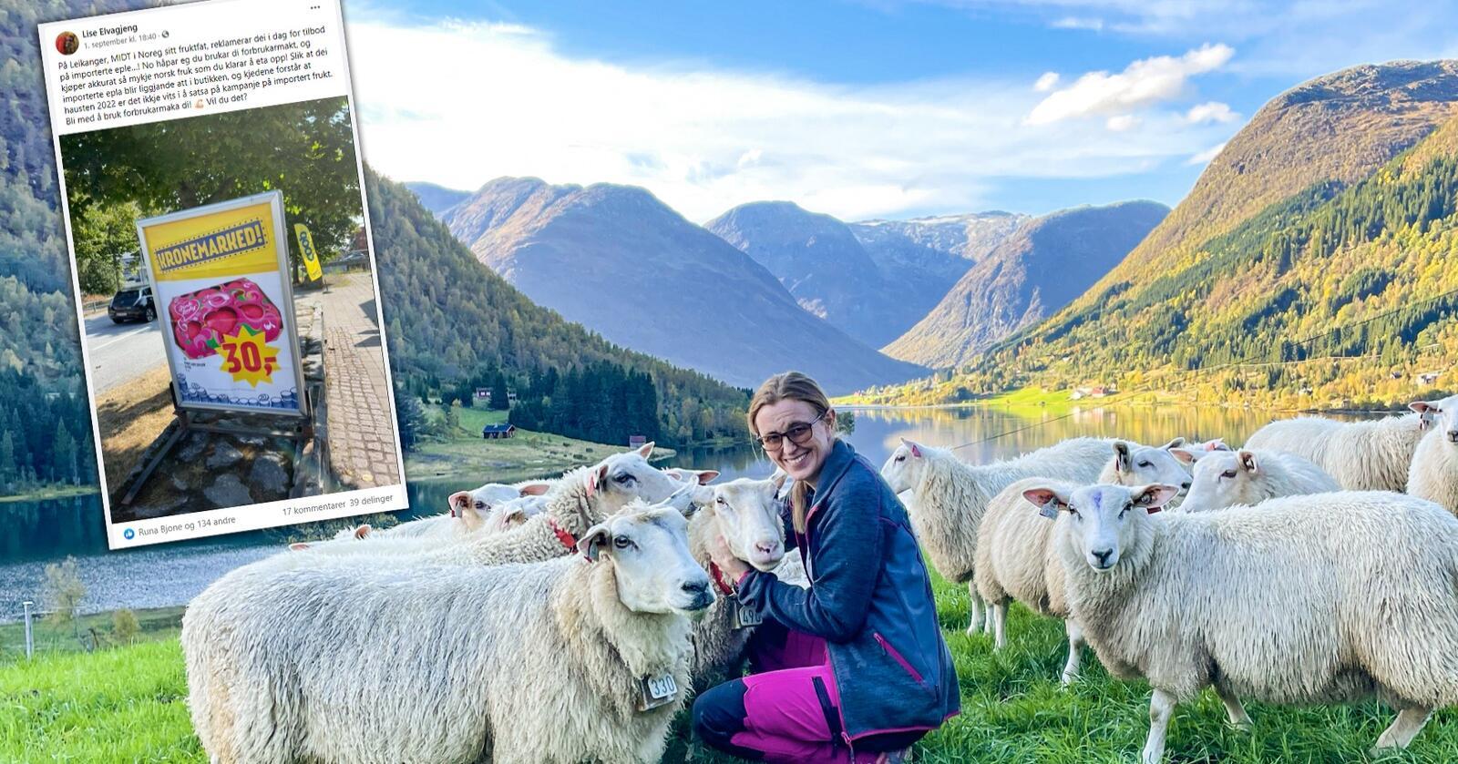 Meningsløst: Lise Elvagjeng er sauebonde i Songdalsdalen, landbruksrådgiver og tillitsvalgt i Nortura. Da hun så en kampanje for importerte epler midt i norsk sesong, reagerte hun og delte en oppfordring på Facebook. (Foto: Privat)