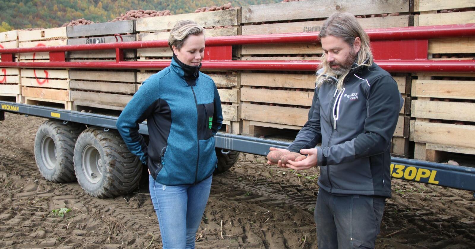 God kvalitet: Kristi Aarak i Sunndalspotet konstaterer at Per Grødal høster fine Asterix-poteter. (Foto: Lars Olav Haug)