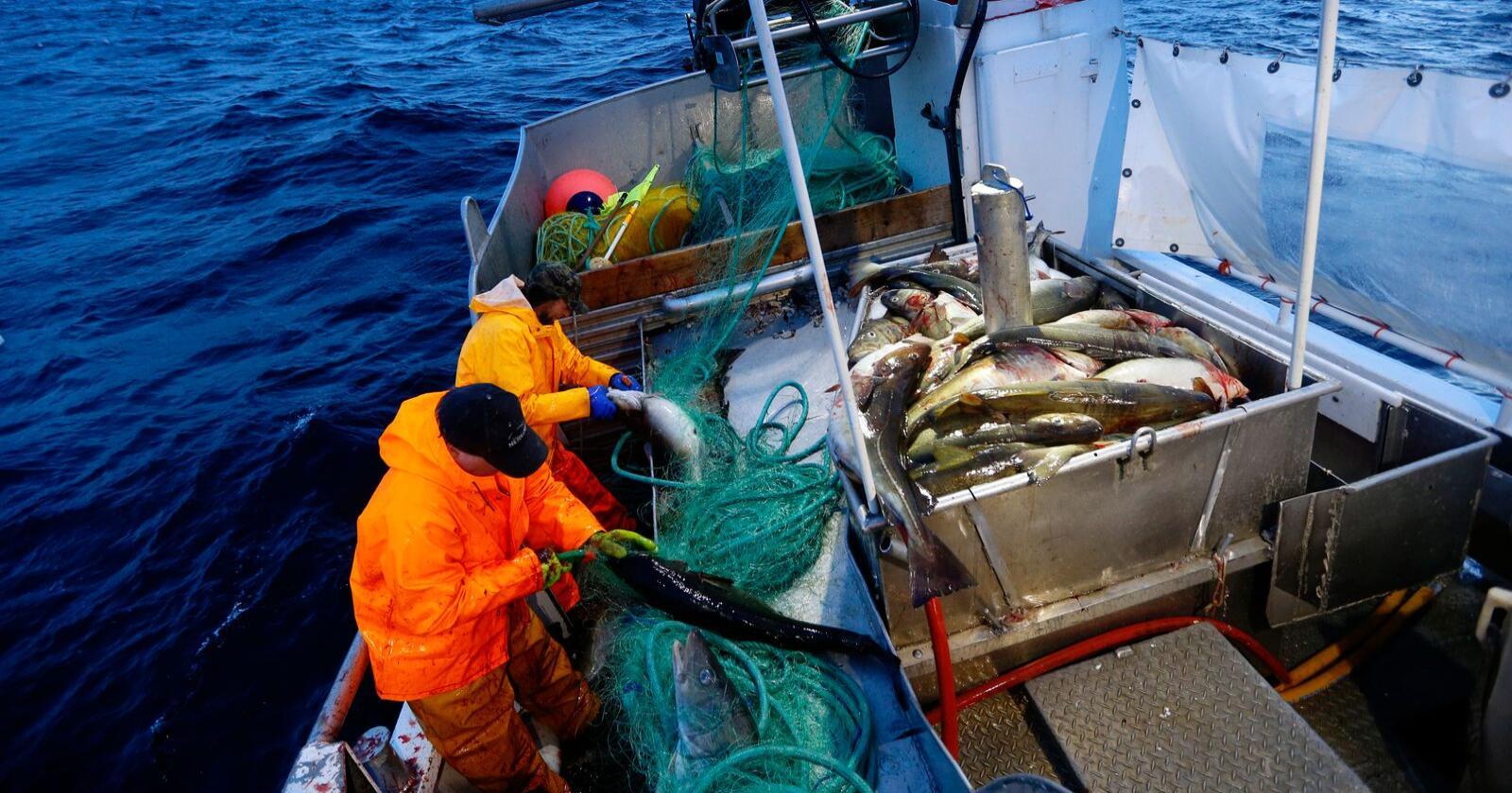 Delegater fra fiskarlagene Kystfiskere organisert i Troms og Finnmark valgte fredag å forlate Norges Fiskarlag.Foto: Cornelius Poppe / NTB scanpix