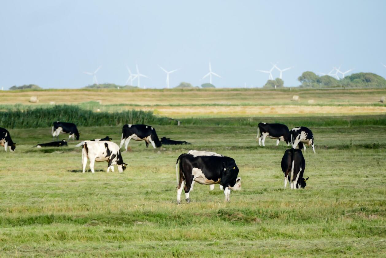Det europeiske landbruket er bekymret over omstrid handelsavtale. Foto: Mostphotos