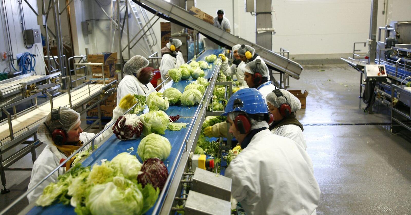 Bilde fra produksjonsanlegget ved Bamas salatfabrikk i Lier. Foto: Bama