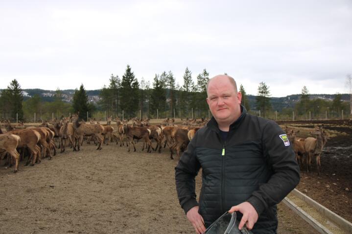 BEITE: Lars Erik Almo har gjerdet inn rundt 300 dekar beiter og skog til hjorten.