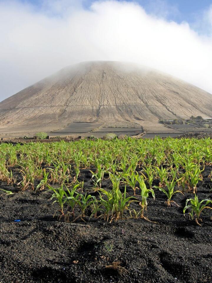 Liv i mørke: På 1700-tallet ble hele Lanzarote forandret etter vulkanutbrudd. Igjen lå et svart steinete landskap som gir assossiasjoner til Mordor og mørke krefter. Men i dette mørke finnes det liv. Alle foto: Anna Strand Andersen