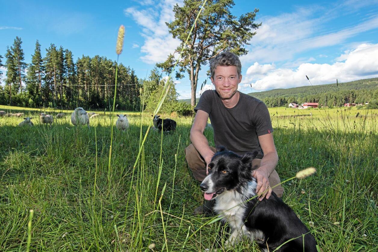 Helhetlig: I tillegg til å levere kjøtt fra gressôret sau, bruker økobonde Anders Lerberg Kopstad dyra til å forbedre jordsmonnet. Foto: Vidar Sandnes
