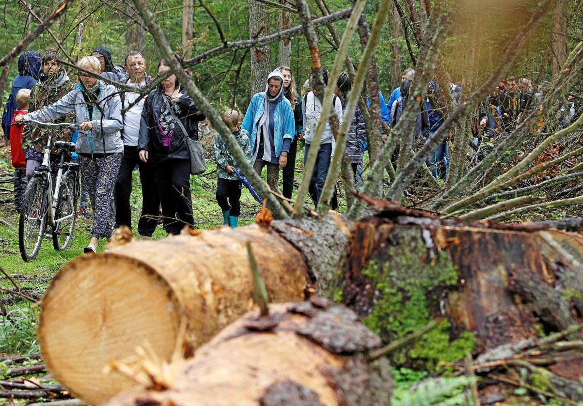 Folk demonstrerte i august mot hoggingen av Bialowieza-skogen i Polen. Foto: AP Photo/Czarek Sokolowski