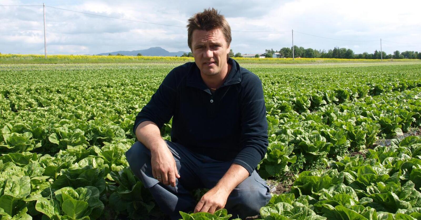 Sliter: Bøndene på Frosta har dårlig tid, høstingen av grønnsaker er alt i gang. – Vi har ikke nok hender, sier grøntprodusent og leder for Grønt fra Frosta, Johan Morten Haugan. (Foto: Morten Andersen)