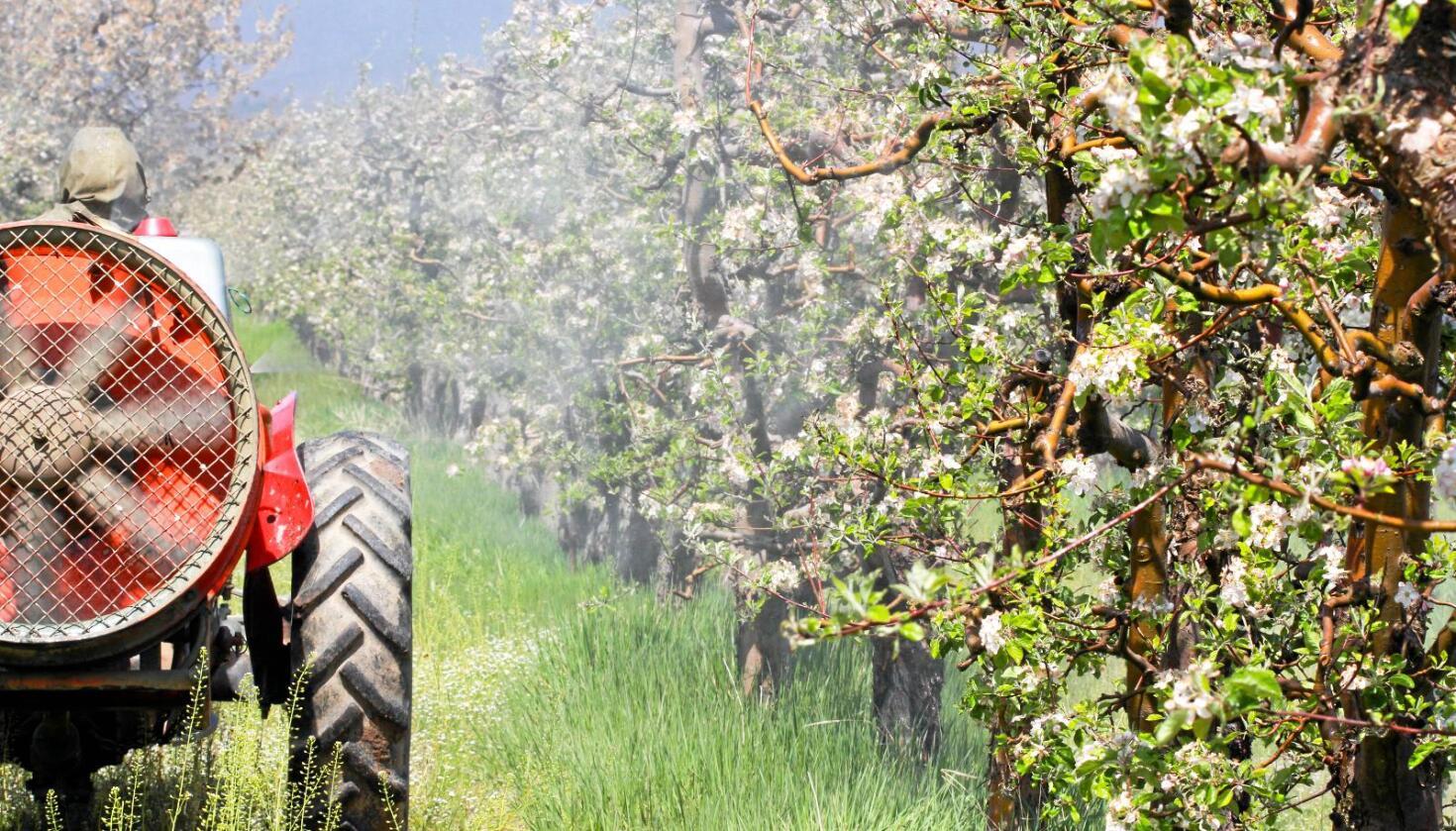 Sprøyting av epletrær: Det brukes ofte en cocktail av sprøytemidler i fruktdyrking. En kommune i Sør-Tyrol tok opp kampen mot giftlandbruket. Foto: Cukicuki / Mostphotos