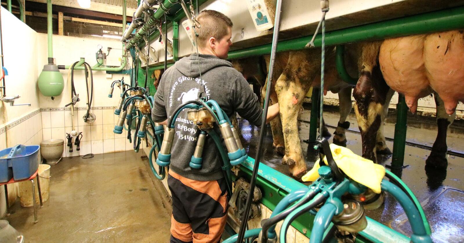 MELKEFETT: Tine vil at norske melkeprodusenter skal strebe etter enda mer fett i melka. Arkivfoto: Norsk Landbruk