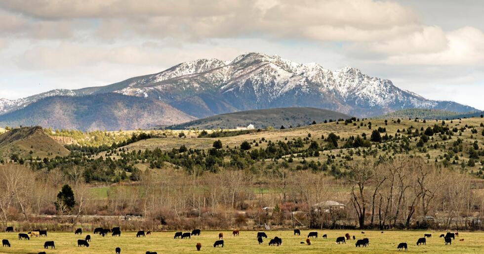 Stort: Landbruk er en viktig næring i delstaten Oregon. Både kortreist- og økobevegelsen og mer konvensjonelt landbruk har stort nærvær der. Foto: Colourbox