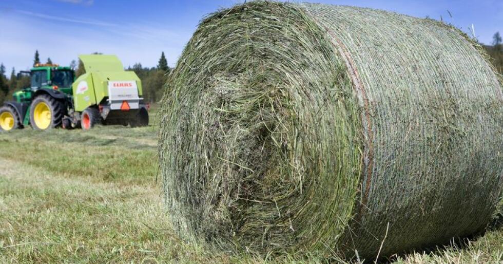 Svenske bønder har den siste tiden opplevd å få høyet sitt stjålet. Høyet på bildet har ingenting med sken å gjøre. Foto: Marcus Pasveer