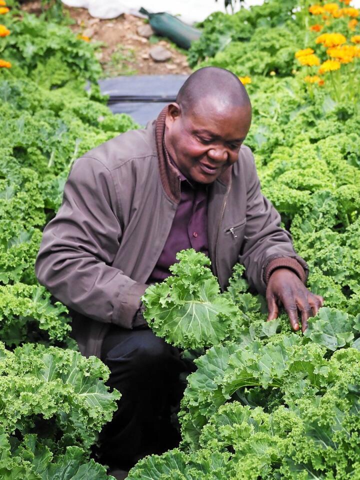 Richard Mukoyo tar en kikk på noen av grønnsakene som ble satt i jorda på begynnelsen av sesongen. Foto: Siri Juell Rasmussen