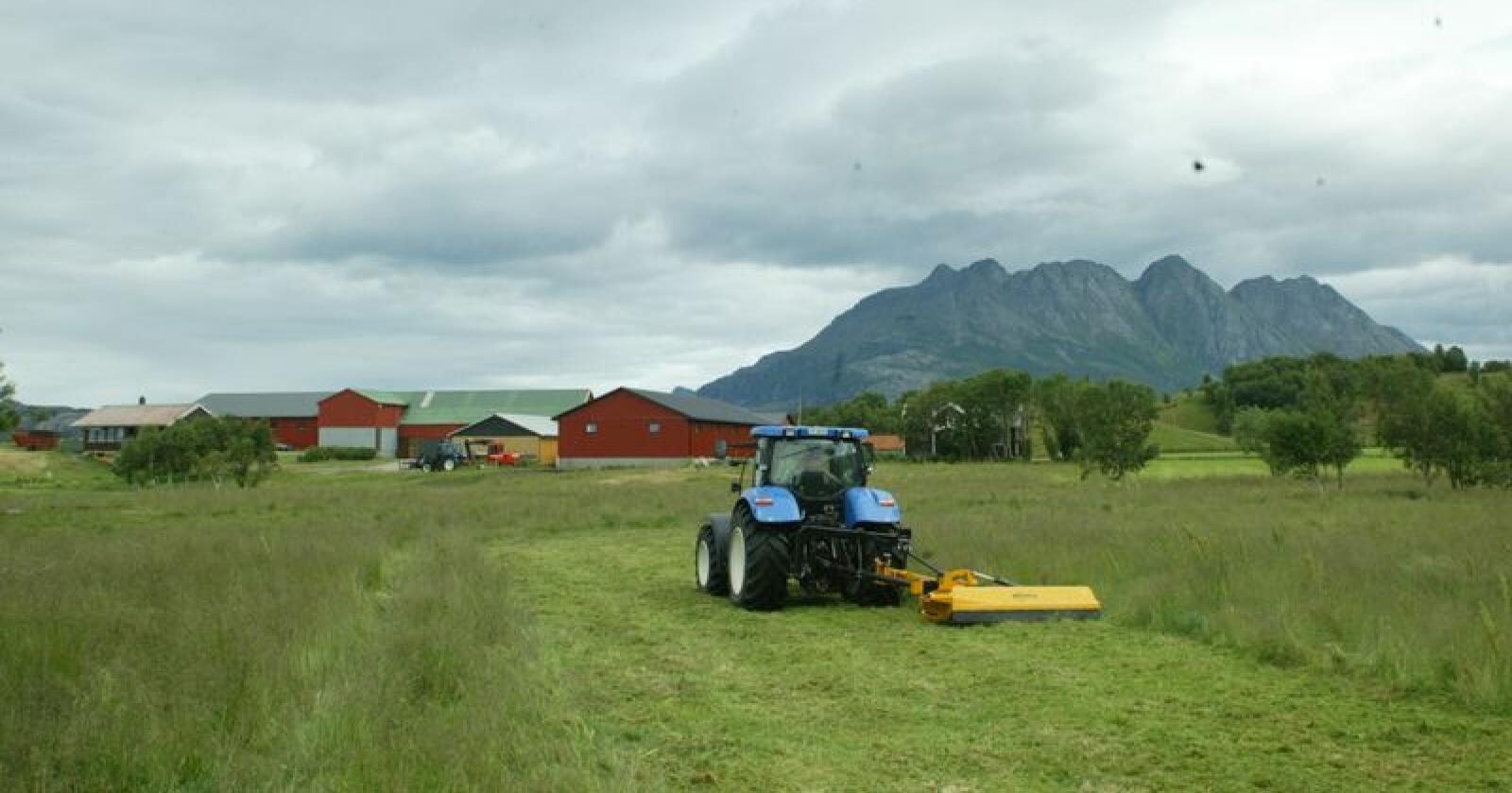 Gras taper: I tilskuddssone 5–7, der blant annet Nord-Norge og Nordvestlandet ligger, har grasarealet gått ned med nærmere 173 000 dekar fra 2008 til 2017. Bildet er fra Bodø. (Arkivfoto)