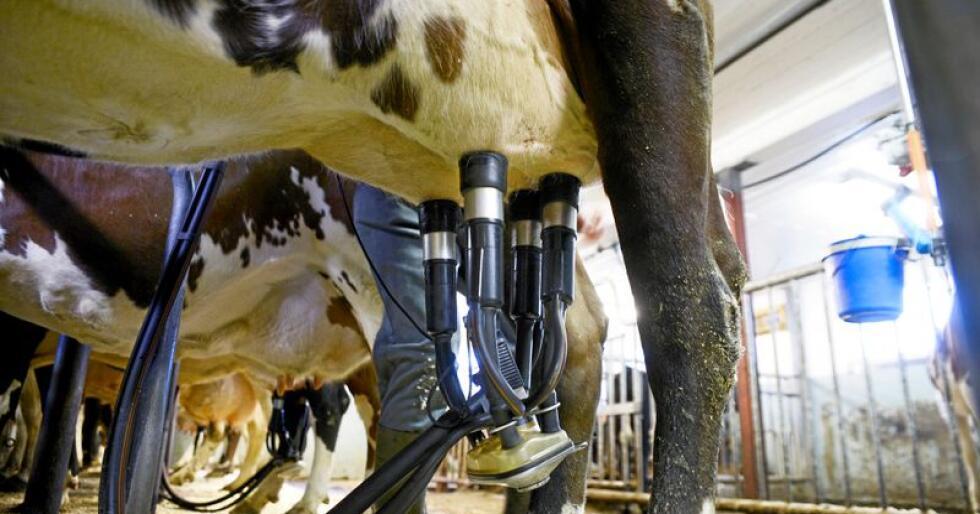 Norske melkeprodusenter ikke vil få inntektsutviklingen som årets jordbruksavtale legger opp til, skriver Einar Meisfjord. Foto: Mariann Tvete