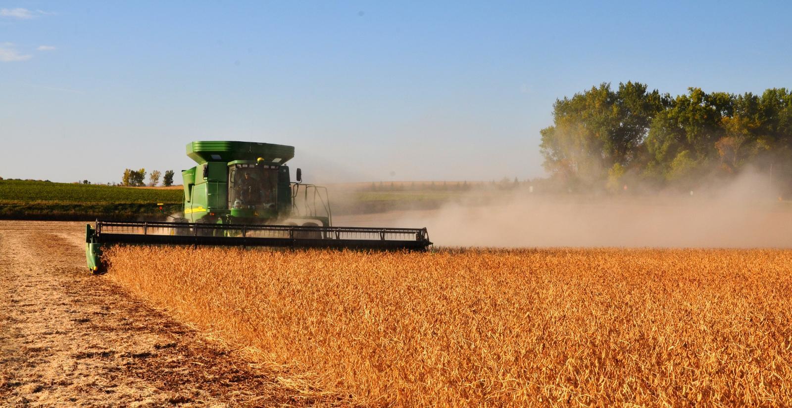SOYA: I 2013 var det totale forbruket av soyamel i norsk landbruk rundt 205 000 tonn. (Foto: Tor Jostein Sørlie)