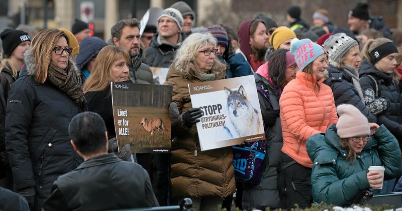 Demonstrasjon for ulv utenfor Stortinget. Foto: Vidar Sandnes
