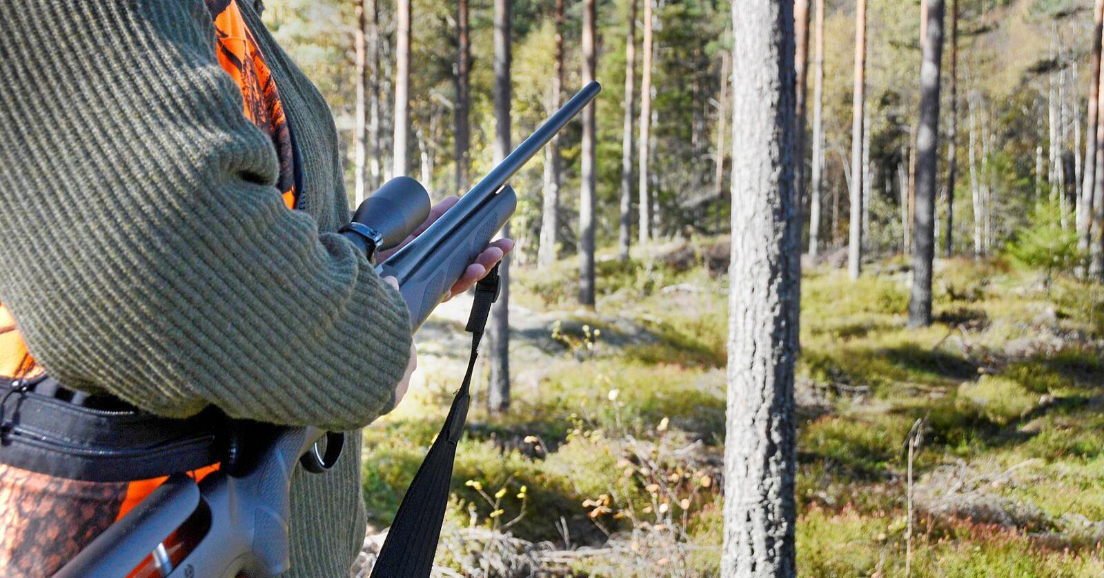 Elgjakta er den tredje mes populære i Norge. Foto: Mariann Tvete