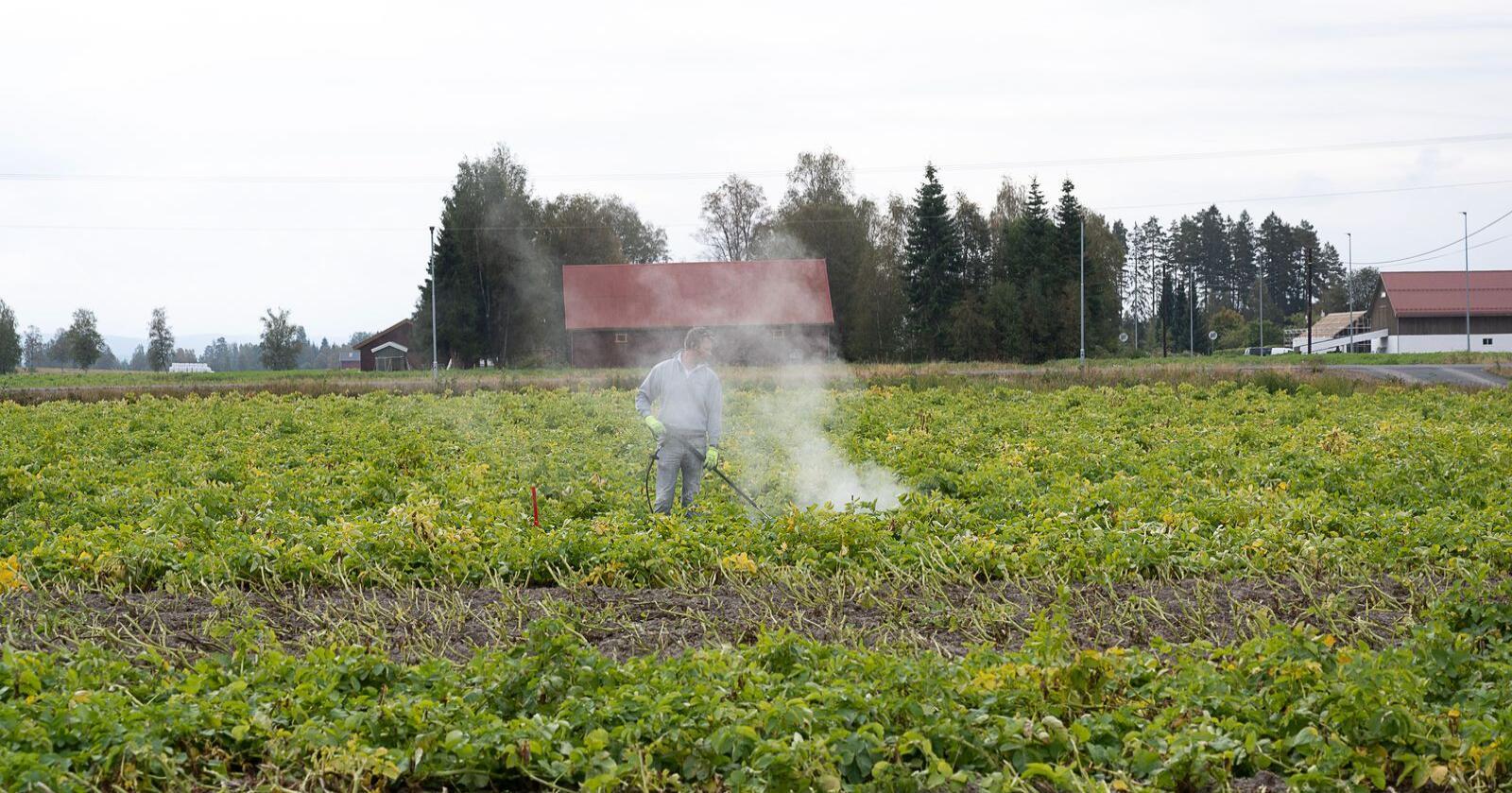 Henrik Fremstad fra Maskinteknikk behandler forsøk med risdreping med varmt vann fra Heatweed. Vannet er under trykk helt fram til dysa og holder over 100 grader når det slippes ut. Alle foto: Erling Fløistad