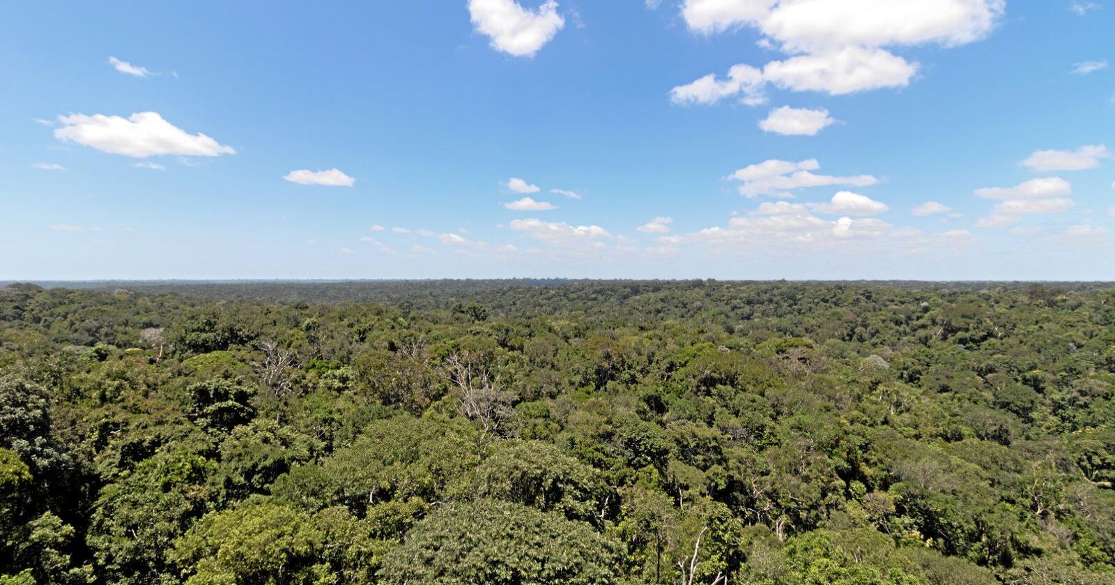 Politikken som føres i Brasil undergraver lover og institusjoner ment for å beskytte regnskog, miljø og menneskerettigheter, skriver forfatterne av innlegget. Foto: Mostphotos