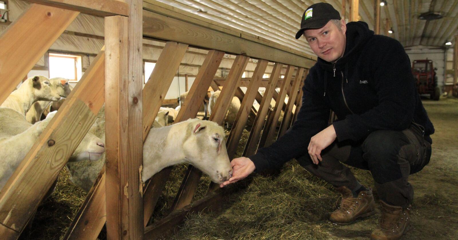 Ingvald Landet er 13. generasjon på gården i Østerdalen. Nå har Bondelaget laget tre filmer om sauebonden. (Foto: Morten Berntsen, NLR)