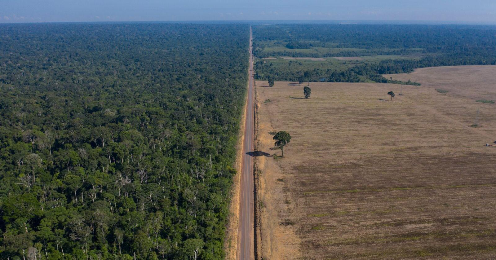 Avskogingen av Amazonas, som her ses i Tapajos-skogen i Para-staten, får deler av skylda for at det er både flom og tørke i Brasil. Foto: Leo Correa / AP / NTB