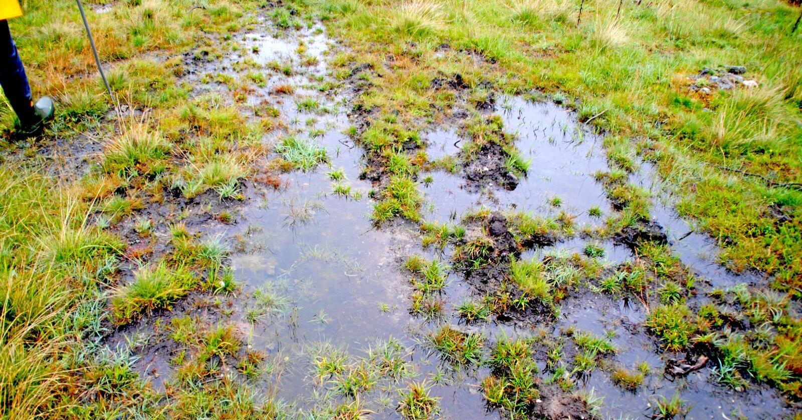 SV krever at regjeringen legger fram et forslag om forbud mot nedbygging av myr. Foto: Lars Bilit Hagen