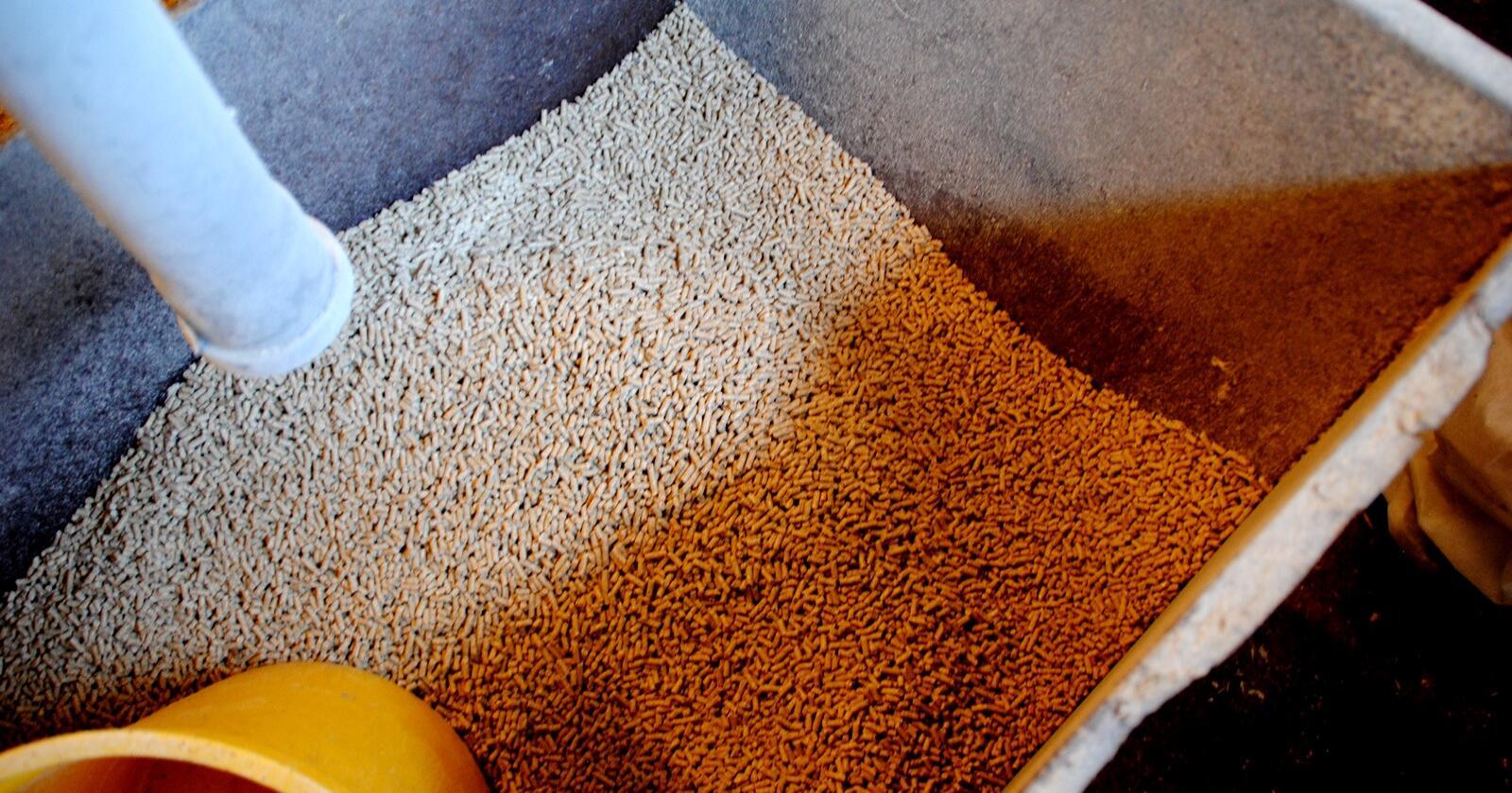Flere selskaper går nå sammen for å blant annet se på hvordan man kan skaffe proteinrikt fôr uten å bruke importert soya. Foto: Lars Bilit Hagen