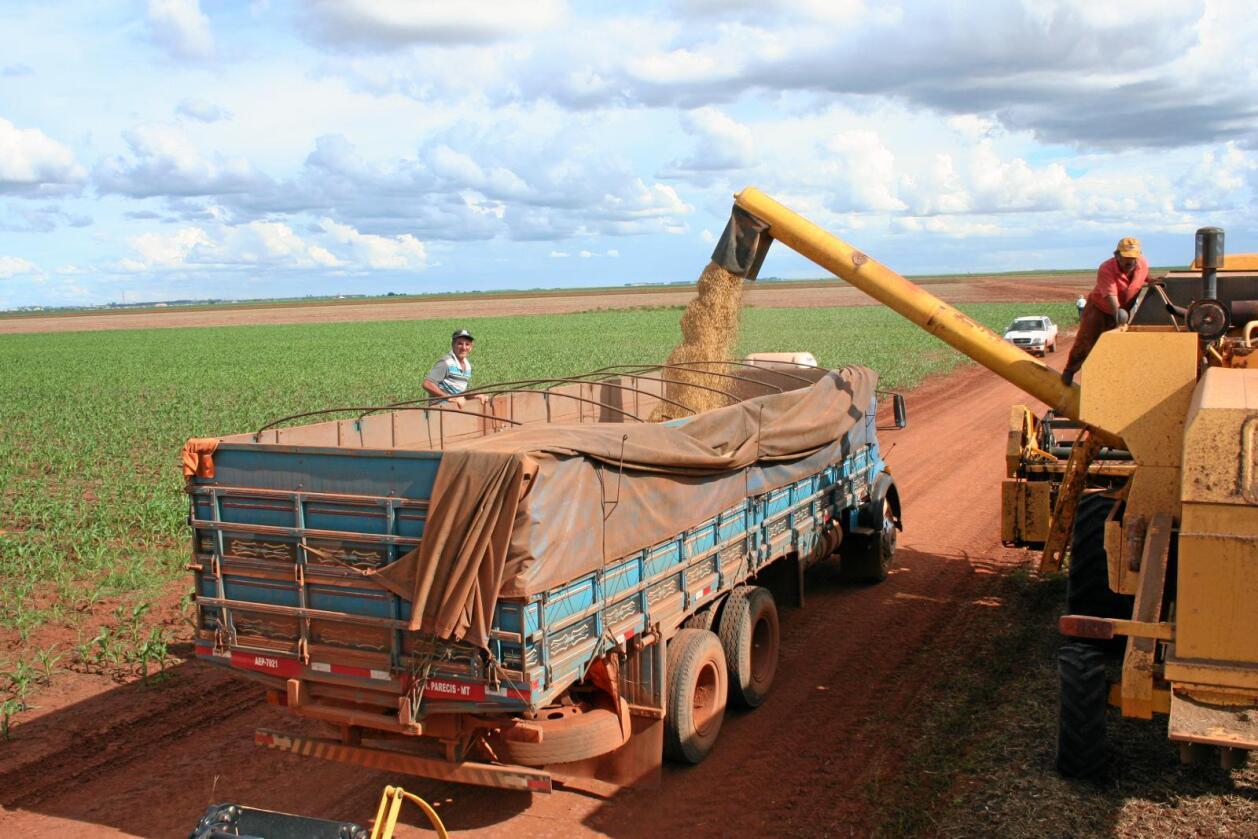 Fôrråvare: Soyainnhøsting i Campo Nova i Mato Grosso i Brasil Foto: Thomas Vermes