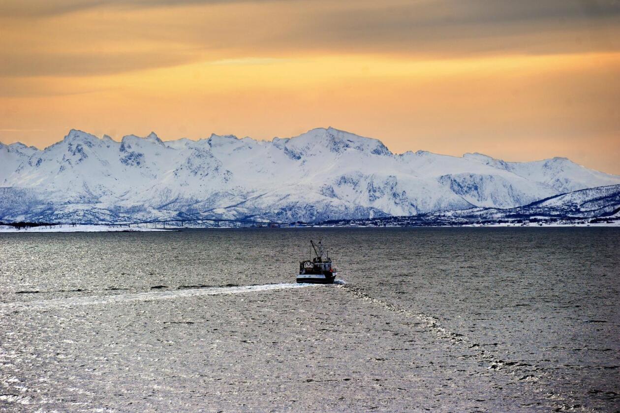 Veteranen i Ap, Karl Eirik Schjøtt-Pedersen, starter sitt nye liv som sjef i Norsk olje og gass, med press for oljeutvinning ved Lofoten og leteting etter olje så langt nord som mulig. Foto: Siri Juell Rasmussen