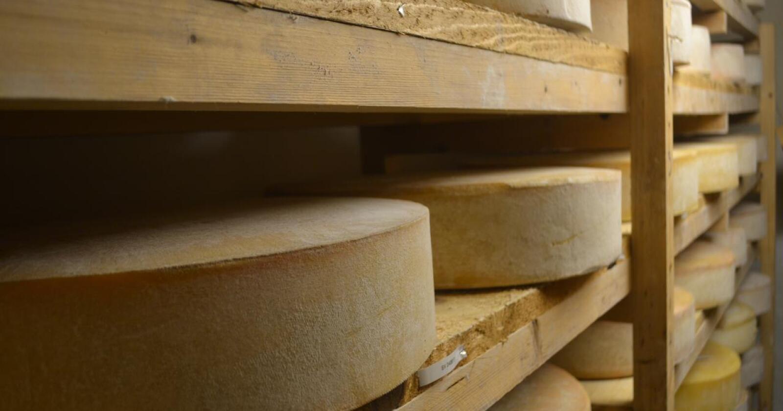 Tid til å teste: Upasteurisert melk kan brukes til ost, men ikke selges som drikkemelk over disk. Foto: Jarle Rueslåtten Paulsen